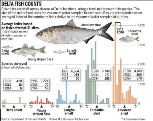 DeltaFish